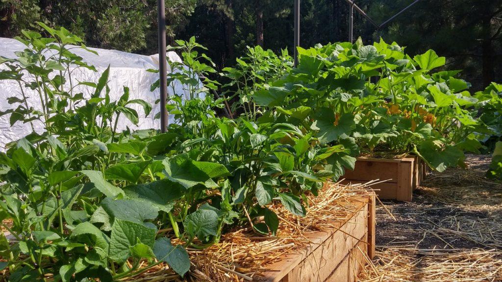 Bild Garten Hochbeete