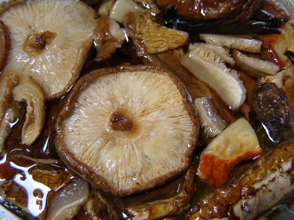 Bild Shiitake Pilze einweichen