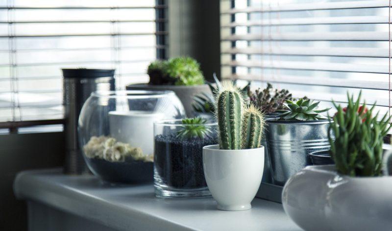 Fensterbank Pflanzen