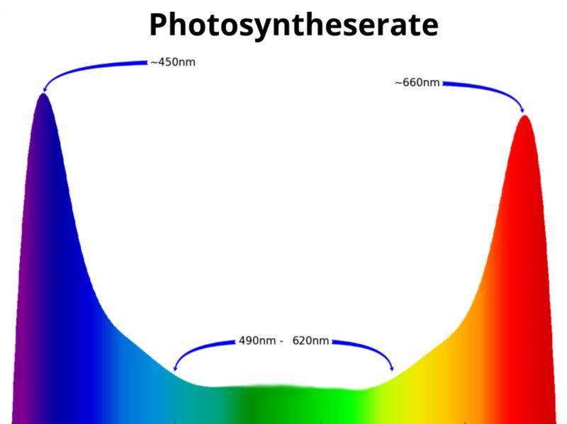 Bild Photosyntheserate