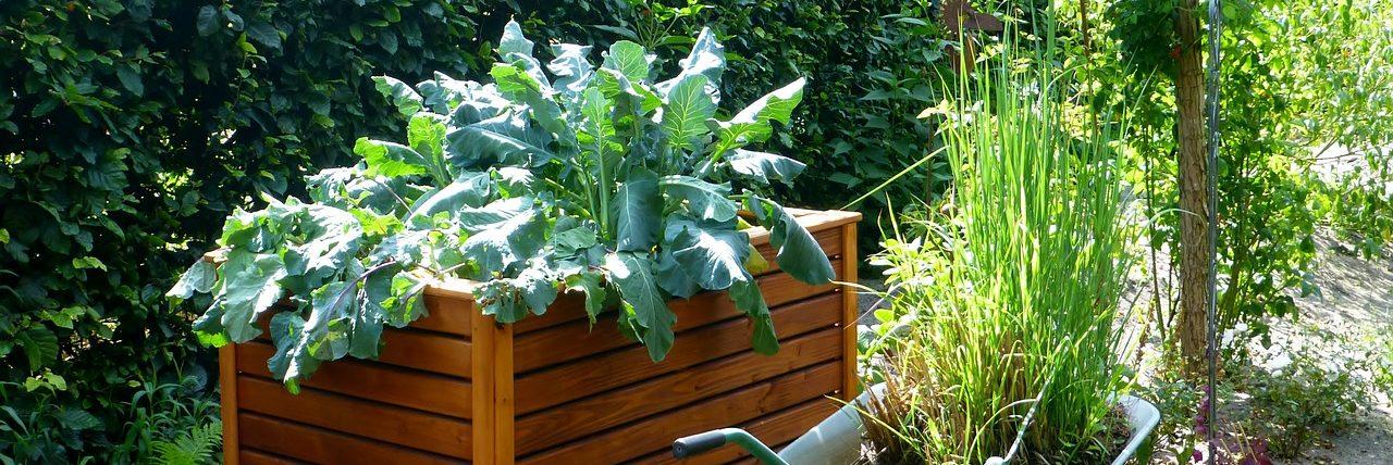 Bild Garten Hochbeet