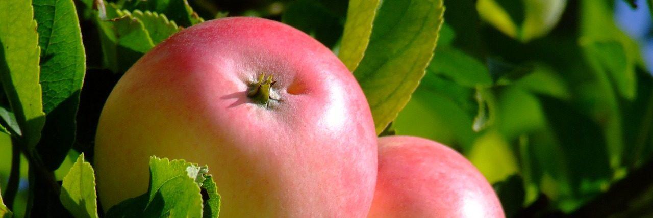 Bild Apfel Säulenobst