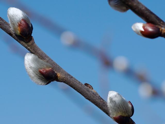 oleander vermehren wasser