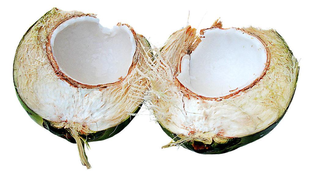 Bild frische Kokosnuss