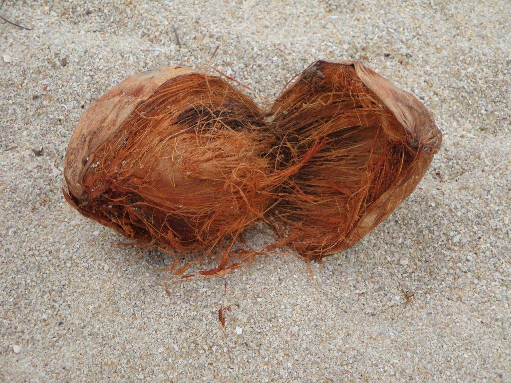 Bild Kokosnuss Fasern