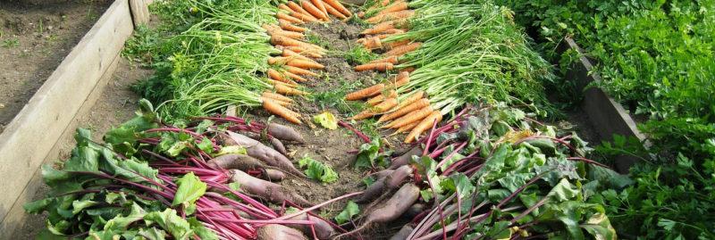 Bild Garten-Ernte