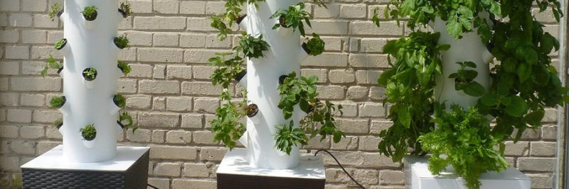 Vertikaler Gemüsegarten Header